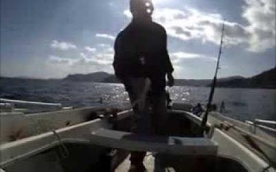 Δείτε τί ψάρεψε Βολιώτης ψαράς! Δε θα το πιστεύετε!