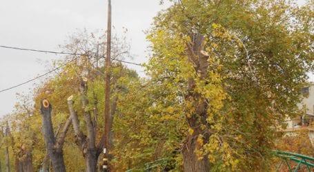 Συνεχίζεται το κλάδεμα δένδρων σε Ζάχου και Καραμπατζάκη