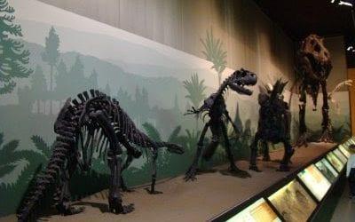 Ελεύθερη είσοδος στο Μουσείο Φυσικής Ιστορίας Βόλου αυτό το Σαββατοκύριακο