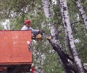 Κλαδεύουν δέντρα – κλειστός ο δρόμος