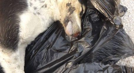 Αλυκές: Σκότωσαν αδέσποτα και δεσποζόμενα ζώα (φωτο)