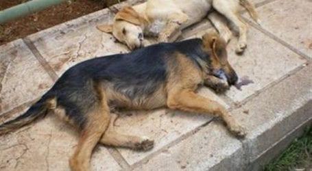 Σκόρπισαν φόλες στο Βόλο – Κίνδυνος για ανθρώπους και ζώα!