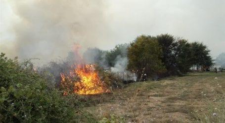 Πυρκαγιά καίει δασική έκταση με αγριοκαστανιές στην Τσαγκαράδα
