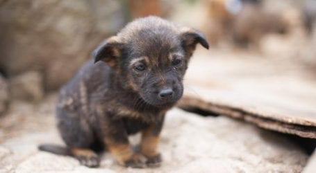 Ξεσηκώθηκαν οι κάτοικοι στο Βόλο από… φόλες σε σκύλους