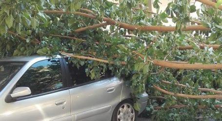 Κλαδί δέντρου έπεσε σε αυτοκίνητο στο κέντρο του Βόλου