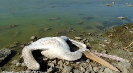 Ξεκίνησε η περισυλλογή των πτηνών από την Κάρλα