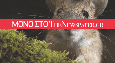 Ποντίκια «τρώνε» τα αυτοκίνητα στο κέντρο του Βόλου!