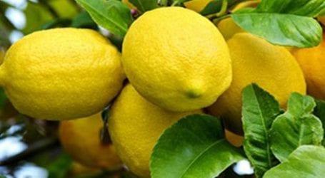Γιατί τα λεμόνια εξαφανίζονται από την βολιώτικη αγορά;
