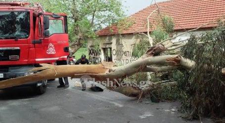 Κι άλλη πτώση δέντρου στη Νέα Ιωνία