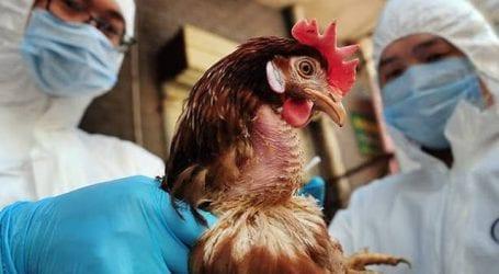 Γρίπη των πτηνών: Κανένα κρούσμα στη Μαγνησία