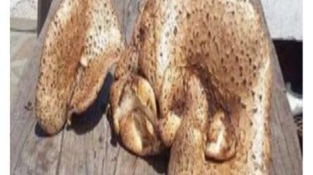 Μανιτάρι γίγας 8 κιλών στην Λίμνη Πλαστήρα