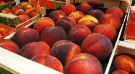 Διανομή φρούτων στους τρίτεκνους της Μαγνησίας