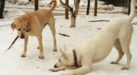 Υπερπληθυσμός και σπίτια σκύλων χωρίς νόμιμες προδιαγραφές στο δημοτικό κυνοκομείο