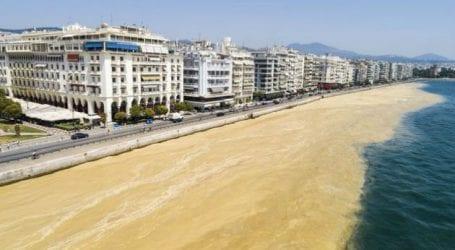 Μετά τον Βόλο και στη Θεσσαλονίκη το φυτοπλαγκτόν (εικόνα)
