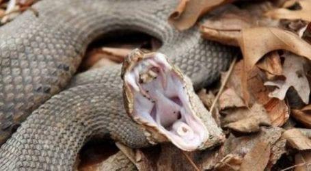 Φίδι δάγκωσε 65χρονο στον Πτελεό