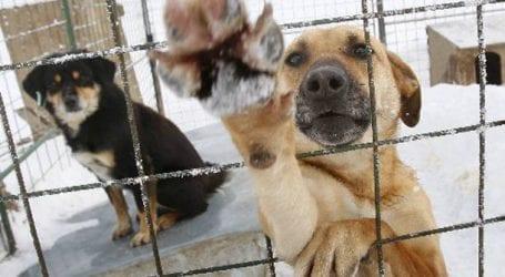 Καταγραφή των τσιπαρισμένων δεσποζόμενων ζώων στον Δήμο Βόλου