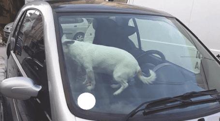Κλείδωσαν το σκύλο τους στο αυτοκίνητο και πήγαν για… καφέ!