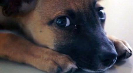 Τι αλλάζει για τα αδέσποτα ζώα και τις υιοθεσίες