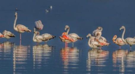 Η Λίμνη Κάρλα πεδίο εκπαίδευσης νέων επιστημόνων από τον Φορέα Διαχείρισης Κάρλας
