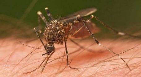 Ξεκινά το πρόγραμμα καταπολέμησης κουνουπιών
