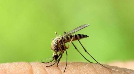 Έντεκα θάνατοι από τον ιό του δυτικού Νείλου στην Ελλάδα