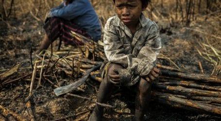 Βρετανία: Χιλιάδες «παιδιά – σκλάβοι» δουλεύουν σε παράνομες φυτείες κάνναβης στο Λονδίνο
