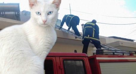 Επέμβαση της Πυροσβεστικής στον Βόλο για να σωθεί ένα… γατάκι