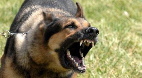 Αδέσποτος σκύλος επιτέθηκε σε κοριτσάκι σε χωριό της Αγιάς