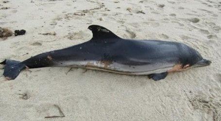 Νεκρό δελφίνι σε παραλία του Παγασητικού
