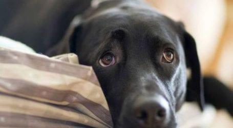 Η Αστυνομία έκανε ελέγχους σε ιδιοκτήτες ζώων συντροφιάς