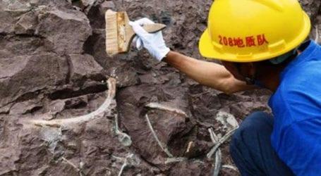 Ευαισθητοποίηση του κοινού για την καταπολέμηση του λαθρεμπορίου πανάρχαιων απολιθωμάτων