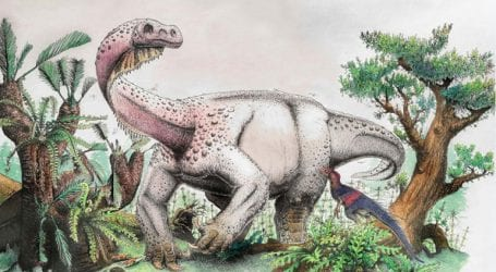 Απολίθωμα γιγαντιαίου δεινοσαύρου ανακαλύφθηκε στη Ν. Αφρική