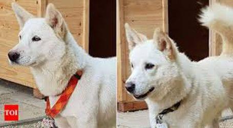 Ο Κιμ Γιονγκ Ουν έστειλε δύο λευκά κυνηγόσκυλα ως δώρο στον ηγέτη της Νότιας Κορέας