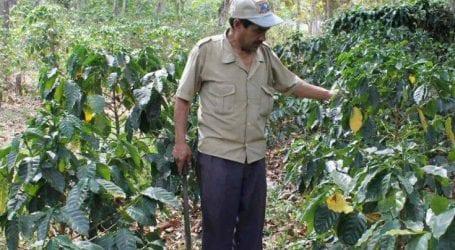 Το μεγάλο στοίχημα του Ελ Σαλβαδόρ είναι ο… καφές