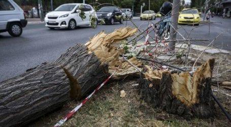Εκατοντάδες κλήσεις στην Πυροσβεστική για πεσμένα δέντρα