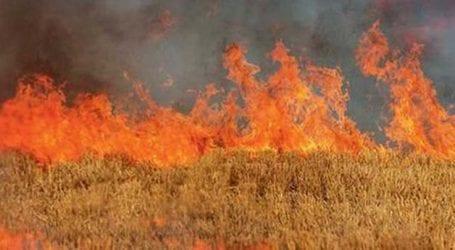 Πυρκαγιά στα σύνορα των νομών Λάρισας – Καρδίτσας