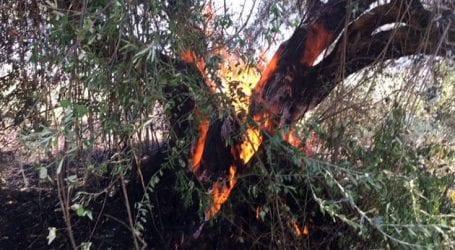 Τρακτέρ με καλαμπόκια έβαλε φωτιά σε αγροτική έκταση στο Αγρίνιο