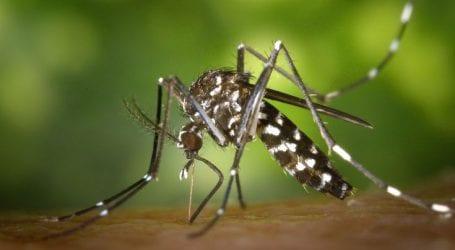 Επιχείρηση… στείρωσης των επικίνδυνων κουνουπιών «τίγρης»
