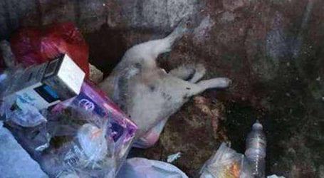 Φρίκη στη Λάρισα: Πέταξαν σε κάδο απορριμμάτων νεκρό σκυλί (φωτό)