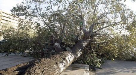 Πτώσεις δέντρων λόγω των ισχυρών ανέμων στη Θεσσαλονίκη