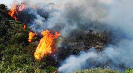 Σε εξέλιξη φωτιά σε δασική έκταση στη Σιθωνία Χαλκιδικής