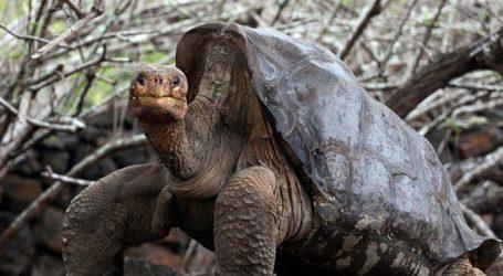 Έκλεψαν περισσότερες από 120 γιγάντιες χελώνες από τα Γκαλαπάγκος