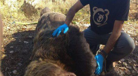 Νεκρή αρκούδα από τροχαίο στην Καστοριά
