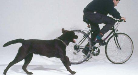 Νεαρός στο Γενικό Νοσοκομείο Λάρισας από δαγκωματιές που δέχτηκε από αδέσποτα σκυλιά