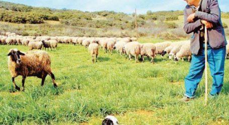 Στη φυλακή Λαρισαίος που εξαπατούσε κτηνοτρόφους της Μαγνησίας
