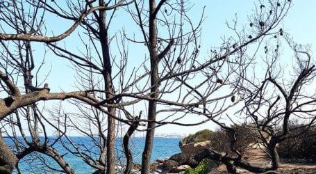 Ένα δέντρο για το Μάτι