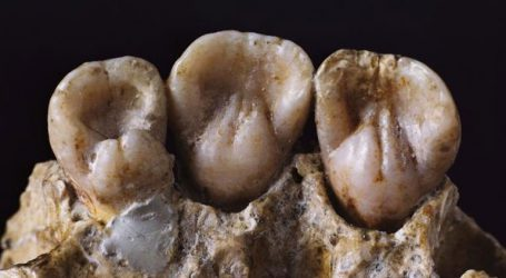 Ανακαλύφθηκε σε παιδικά δόντια Νεάντερταλ 250.000 ετών η αρχαιότερη έκθεση σε μόλυβδο