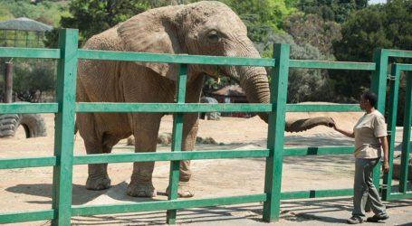 Φιλόζωοι ζητούν την απελευθέρωση της τελευταίας ελεφαντίνας του ζωολογικού κήπου του Γιοχάνεσμπουργκ