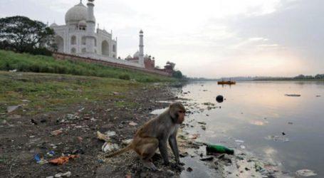 Μαϊμού άρπαξε μωρό από την αγκαλιά της μάνας και το σκότωσε