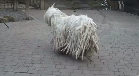 Αυτές είναι οι πιο σπάνιες ράτσες σκύλων